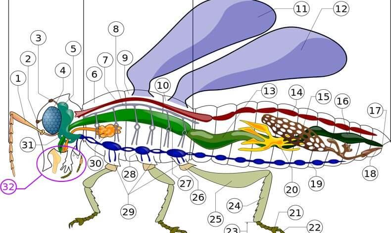 Insekten Blog