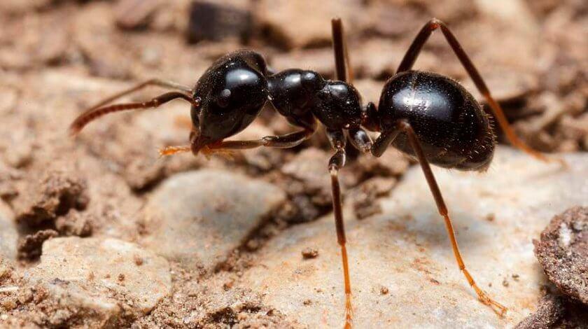 Ameisenbekämfung Berlin Hausmittel