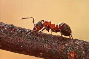 Ameisenbekaempfung im Garten